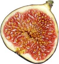 التين فاكهة من الجنة