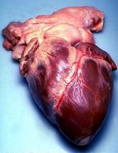 بحث رائع: قلوب يعقلون بها