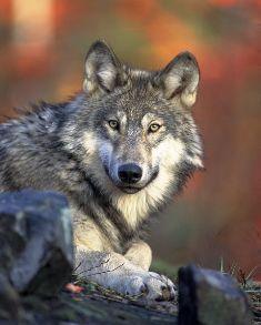 آيات الله في حماية الكائن الحي لنفسه