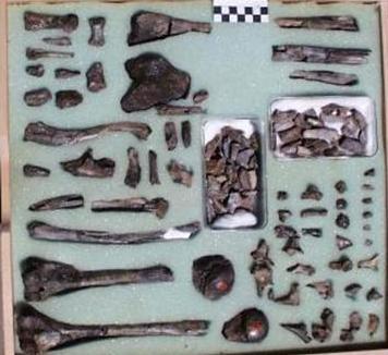 قل كونوا حجارة أو حديدا: حديث القرآن عن الحفريات