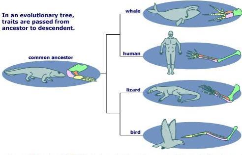 نظرية تشابه الخلق والتكيف