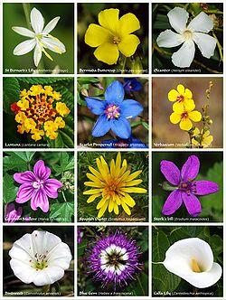آيات الله في التلقيح والإزهار