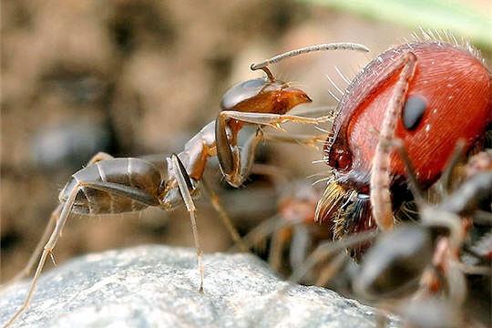 هل رأيتم مرة نملة تطلب تأشيرة مرور