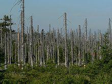 التغير البيئي وإشاراته في نصوص السنة النبوية