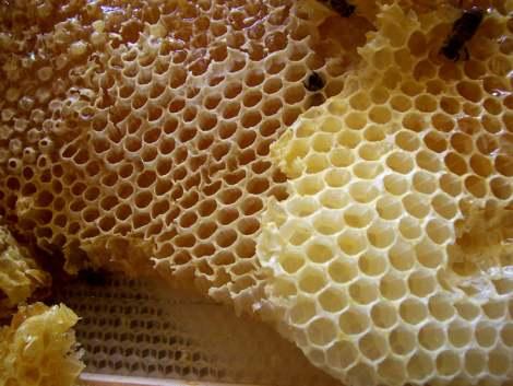 العسل شفاء للناس