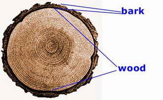 السيقان النباتية من دلائل القدرة الإلهية