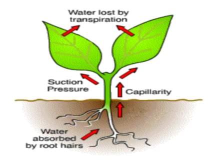الامتصاص المائي المعجز في النبات آية من آيات الله