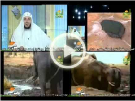 بعض مظاهر رحمة الله في مخلوقاته الشيخ أمين الأنصاري