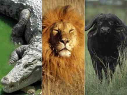 السلوك الجماعي لدى الحيوانات آية من آيات الله