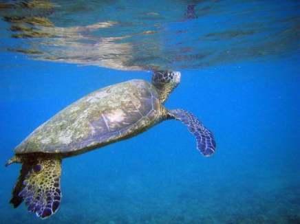 صور من دلائل الهداية الربانية للكائنات الحية