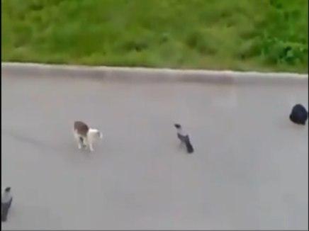 طيور تحاول فك اشتباك بين قطتين سبحان الله