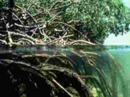 الآيات الربانية في التركيب الداخلي للجذور النباتية