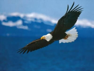 آيات الله في طيران الطيور