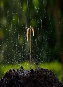 عالم النبات ـ أختلاط الماء بالارض الهامدة ـ…