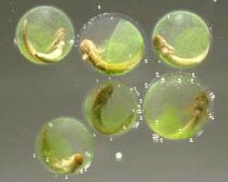 عجائب قدرة الخالق // نبات ينمو في خلايا حيوان
