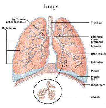 أنفسـكم تبصــرون التنفسي a10.jpg