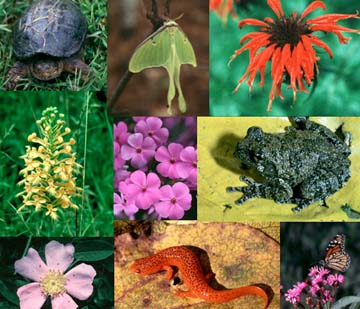 التنوع الحيوي (Biodiversity) في القرآن الكريم