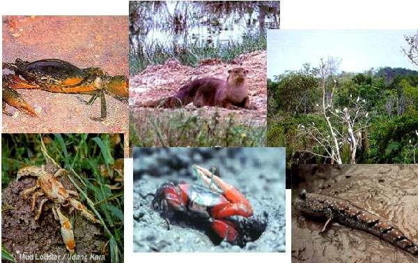 التنوع الحيوي (Biodiversity) في القرآن الكريم 142563