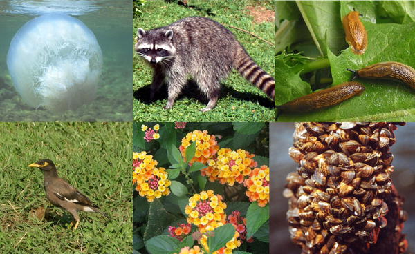 التنوع الحيوي في القرآن الكريم Biodiversity15
