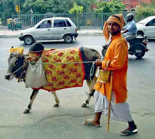 أحد مظاهر الشرك بالله: عبادة البقر في الهند