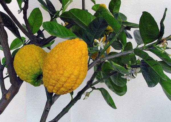 النبات والمؤمن.. معجزة علمية