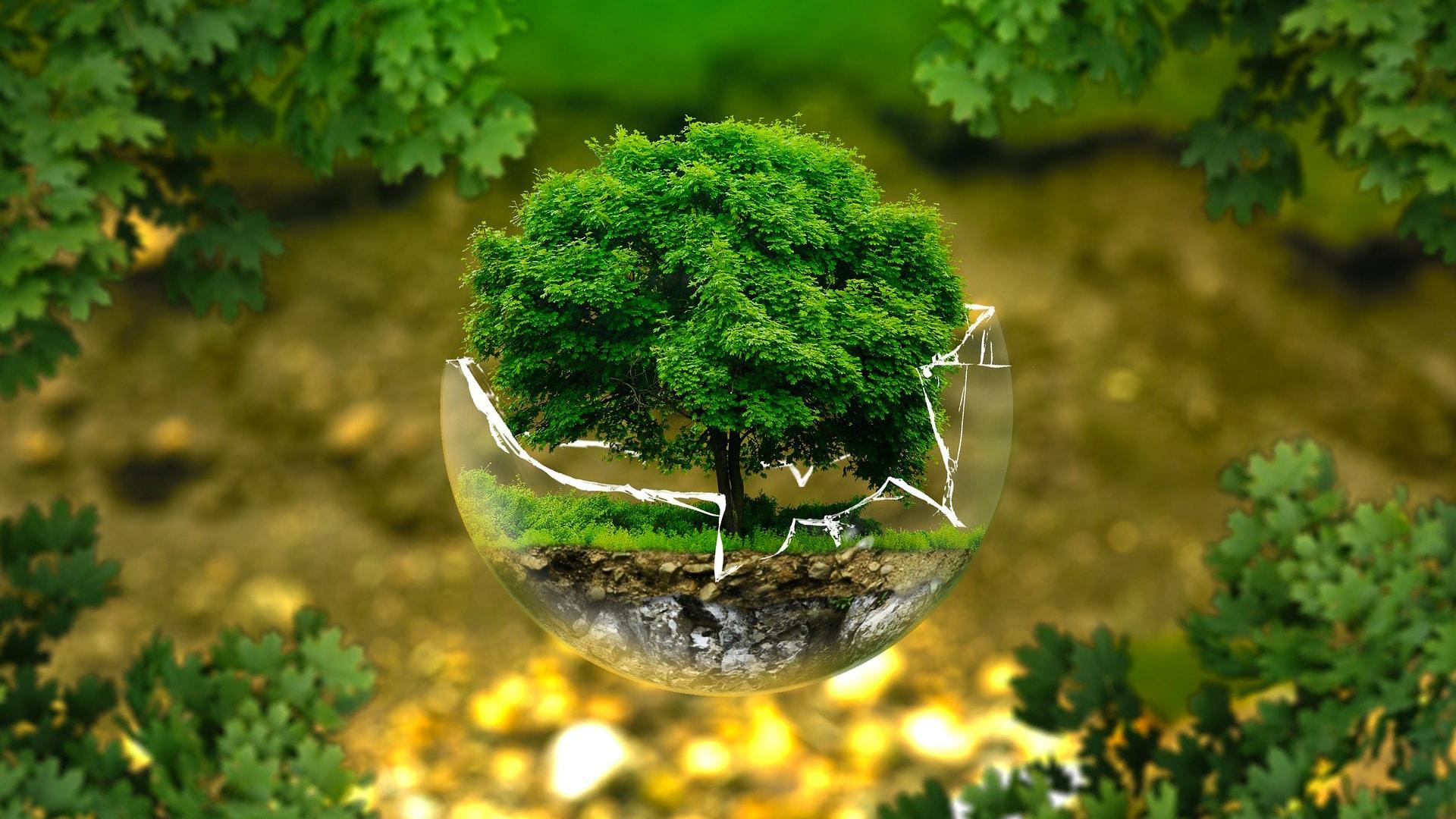 محمد (عليه السلام) رائد الحفاظ على البيئة
