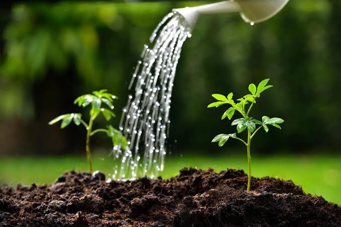 التربة والماء وأثرهمـا فـي إنبـات الطعـام