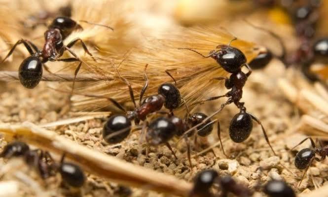 من آيات الله في النمل